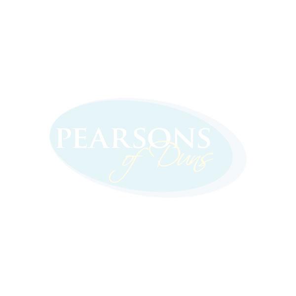 Clematis plant in grey plastic pot