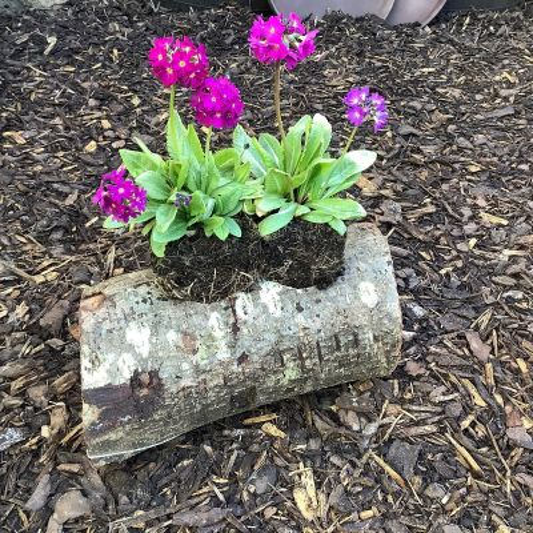 Pot-a-Log Planter (two hole)